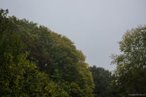 Grått väder men färgglad natur